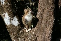 Prīti in the tree
