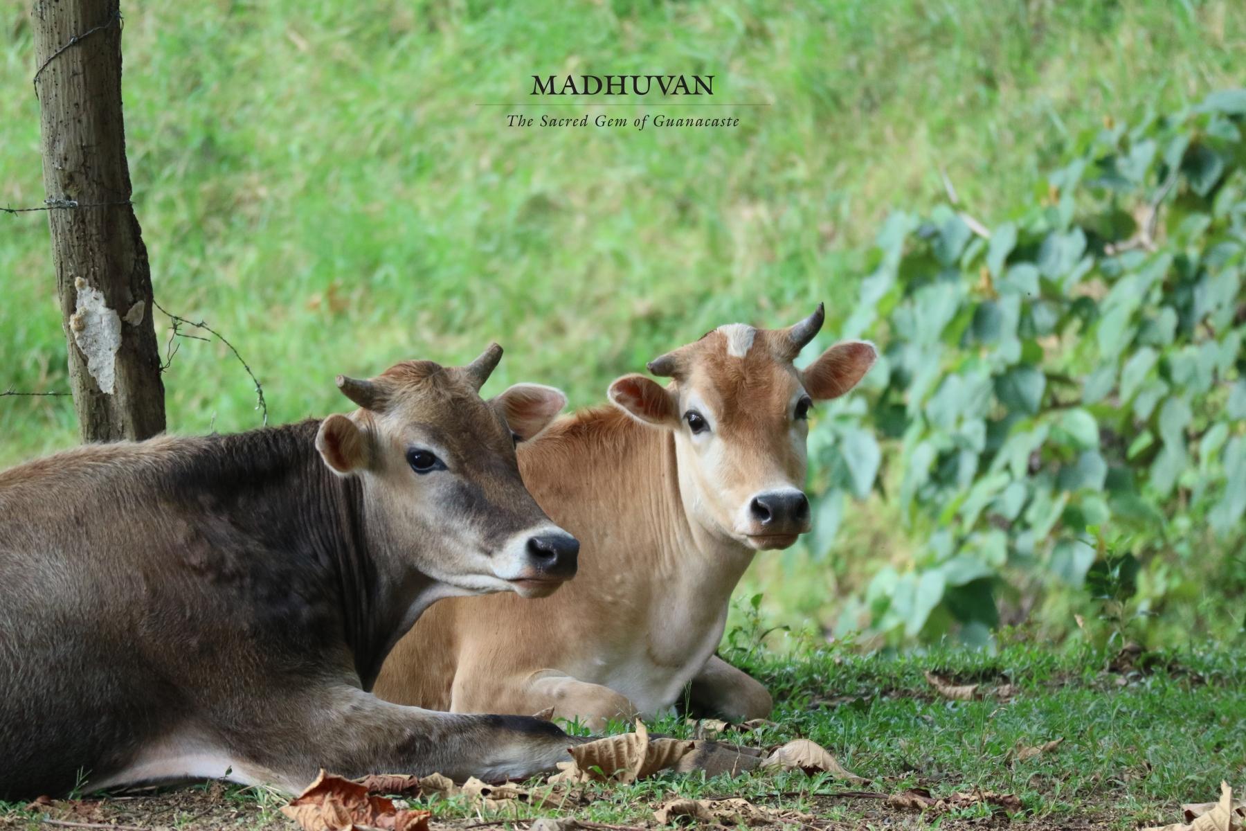Madhava and Madhavi
